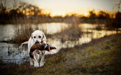 Jagtsprog